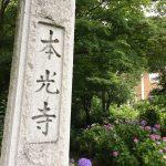 幸田町本光寺であじさいを見てきました&古民家カフェ茶蔵で子連れランチ